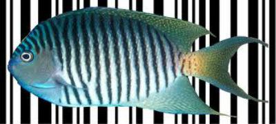 cá - fish - mã vạch